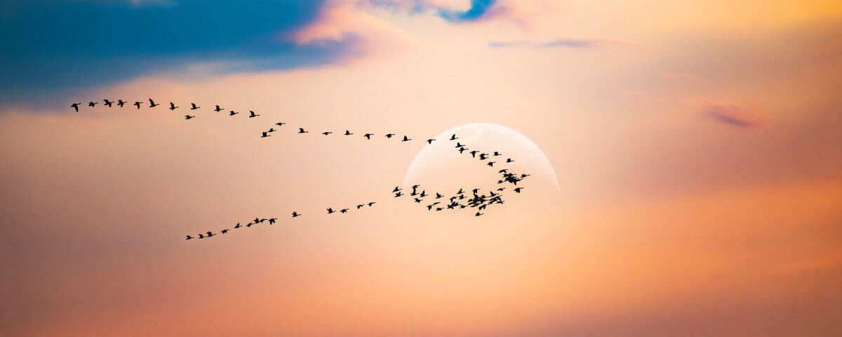Laravel migrations vs CodeIgniter migrations